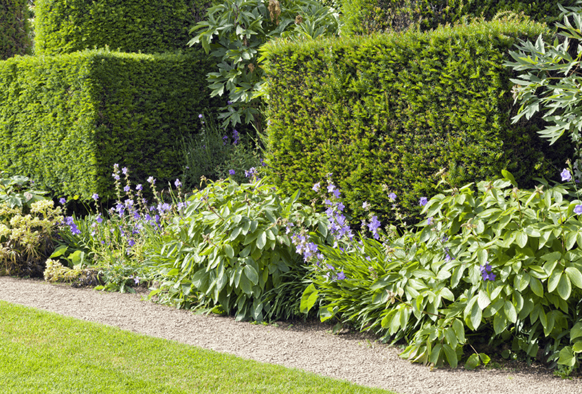 how to choose the right plants for an outdoor living space