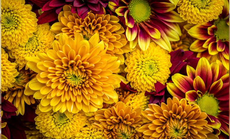 the perfect flowers to add to your home during Fall are Marigolds, Black-Eyed Susans, Helenium, False Sunflowers and Chrysanthemums