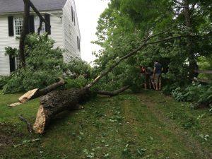 fallen tree that damaged black louver timberlane shutters